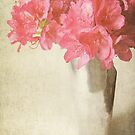 Rhododendron by Lyn  Randle
