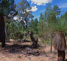 Grass Tree Forest - Pilliga NSW. by Liz Worth