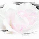 Summer's Rose © by Dawn M. Becker