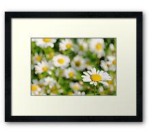 Happy Daisy  Framed Print