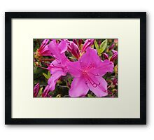 Bright Pink Framed Print