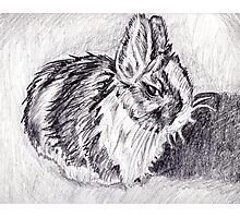Scraggly Bunny Photographic Print