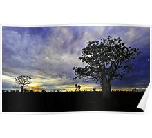 Sunset behind Boab Trees at Fitzroy Crossing Poster