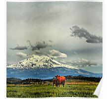 California Cows Poster