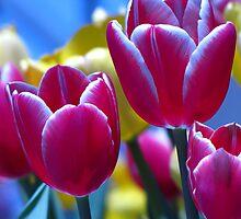 tulip heaven by leapdaybride
