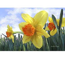 Sunlight on the Daffodils Photographic Print