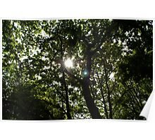 Sunlight piercing the canopy Poster