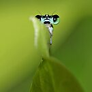 The Shy Damsel......... by AroonKalandy