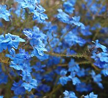 A Study in Blue by kalaryder