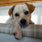 Annie, a rescued and saved lil lady by KanaShow