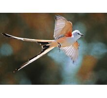 Aerial Ballet of the Scissortail  Photographic Print