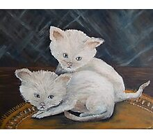 Kittens so CUTE! Photographic Print