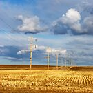 Sunlit Alberta Spring by ionclad