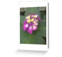 "let a little light ""shine"" through Greeting Card"