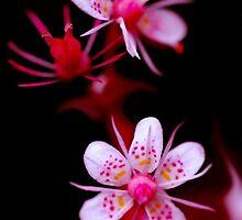 Spotty Dotties by Rebecca Eldridge