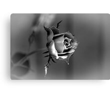 Rose in Black & White Canvas Print