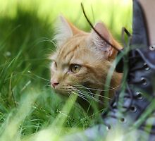whiskers, laces and blades of grass by Ben Luck