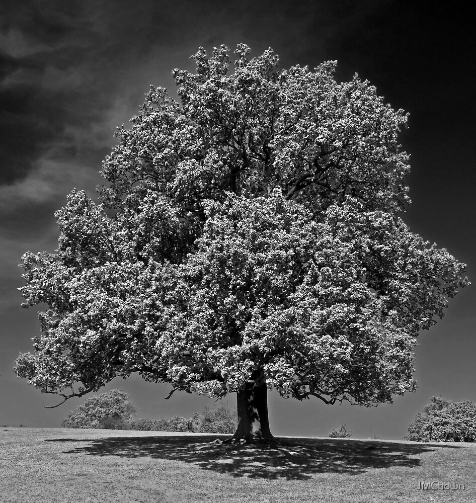 Tree on Woburn Abbey Estate by JMChown