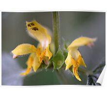 Yellow Archangel Poster