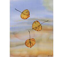 Floating Aspen Leaves Photographic Print