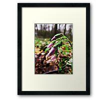 Spring Beauties Framed Print