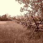 Fence Row in Sepia by Sheryl Gerhard