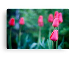 The Beautiful Spring Flowers Canvas Print