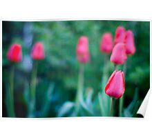 The Beautiful Spring Flowers Poster