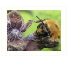 bumbley bumble bee Art Print