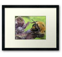 bumbley bumble bee Framed Print