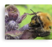 bumbley bumble bee Canvas Print