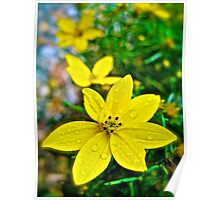 Yellow Flowers - North Carolina Poster