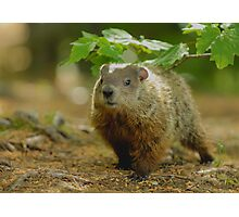 Groundhog Day, (okay, weekend) Photographic Print