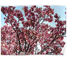 Heavenly Magnolias in May Poster