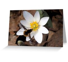 Fuzzy Butt ~ Large Bee Fly Greeting Card