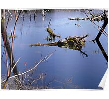 Turtle in a Beaver Pond Poster