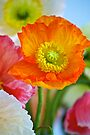 Impressionistic Poppy 2 by Renee Hubbard Fine Art Photography