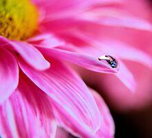 Drop of Crystal by strgaZeNn