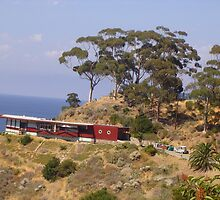 Red House on Catalina Island  by Shelby  Stalnaker Bortone