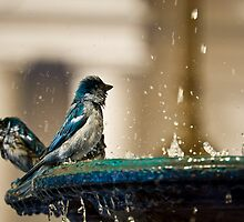 Sparrows In Blue by Agro Films