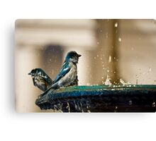 Sparrows In Blue Canvas Print