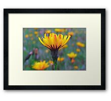 Color Me Beautiful Framed Print