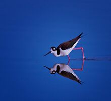 Tilted Stilt by John Absher