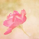 Delightful Rose by Maria Medeiros