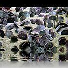"""Living Sand Dollars""   by Gail Jones"