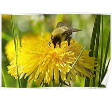 The Dandelion and the Bumblebee Poster