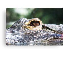 Alligator Watching Canvas Print