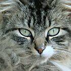 Barn Cat~ by virginian