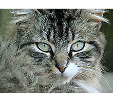 Barn Cat~ Photographic Print