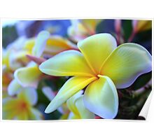PLUMERIA IN THE SPRING Poster